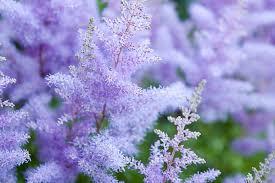 flowering bog garden plants
