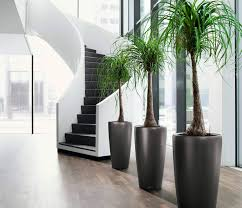 home interior plants modern herb pots interior plants office for home designing