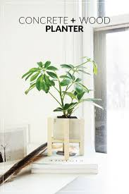 How To Build A Planter by Diy Concrete Wood Planter Stand