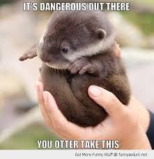 Otter Memes - otter puns punpedia