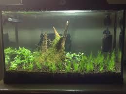 Petsmart Christmas Aquarium Decorations by Petsmart Dwarf Hairgrass Suggestions The Planted Tank Forum