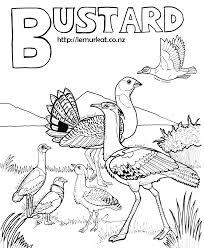 filegreat indian bustard from dnpjpg rare birds photo contest