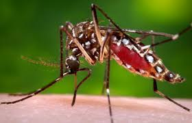 How To Get Rid Of Mosquitoes In Backyard by How To Get Rid Of Mosquitoes Without Chemicals Purelawn