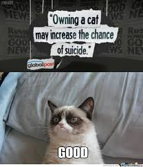Mean Kitty Meme - angry cat memes best collection of funny angry cat pictures