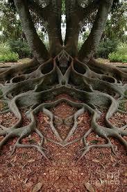 trees ल unique tree