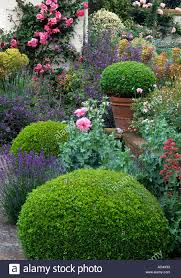 Garden Design Hedges Interior Design