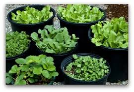 first vegetable garden ideas