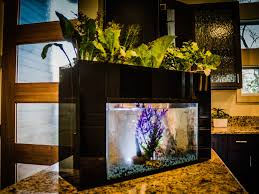 aquasprouts system transforms fish tank into garden business insider