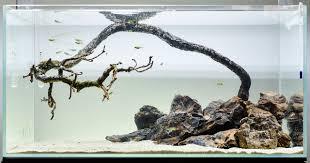 Driftwood Aquascape 100 Driftwood Aquascape Fish Tank Bonsai Driftwood Aquarium