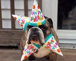 Pug Birthday Meme - sweet happy birthday dog gifs quotes wishes for facebook