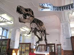 the manchester museum top tips before you go with