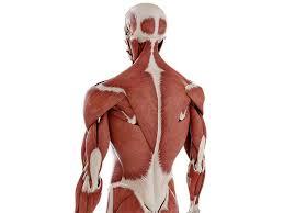 Netter Atlas Of Human Anatomy Online Complete Anatomy U2013 3d4medical