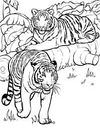 25 animal coloring pages ideas coloring