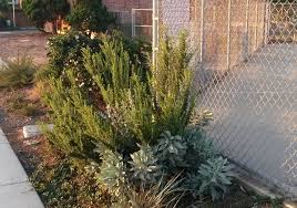 california native plant gardens projects u2013 artemisia landscape architecture