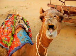 thar desert animals rajasthan eat drink stay see u2013 zo outdoors