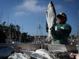 running on empty fate of salmon at stake in western water fight