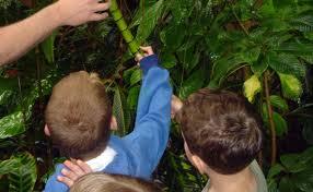 Adaptations Of Tropical Rainforest Plants - tropical rainforest atlanta botanical garden