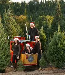did your christmas tree shopping experience fall short on the