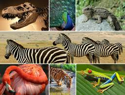 the importance of biodiversity conservation meganshanahan