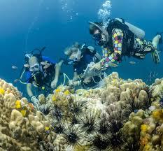 idc koh tao padi underwater naturalist instructor courses