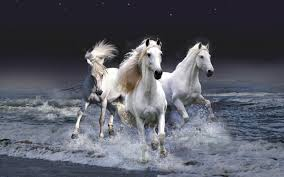 100 horse wallpaper for bedrooms animal print theme