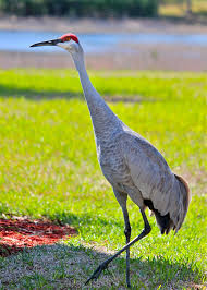 Florida birds images More florida birds phillip 39 s natural world jpg