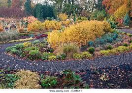 mixed shrub garden winter stock photos u0026 mixed shrub garden winter