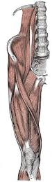 Interactive Muscle Anatomy The 25 Best Human Body Anatomy Ideas On Pinterest Human Human