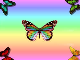 pk61 100 quality hd butterflies pictures mobile pc iphone and