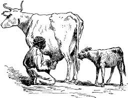 sketch farmer milking cow coloring pages sketch farmer milking