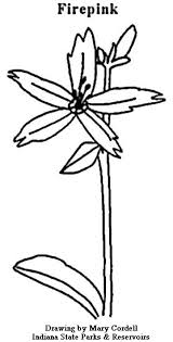 dnr coloring pages plants