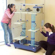Guinea Pig Cages Cheap Guinea Pig Cages Hayneedle