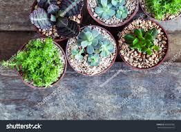 macro photo succulents plants small stock photo 365023982