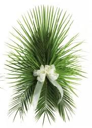 palms for palm sunday purchase fresh palms