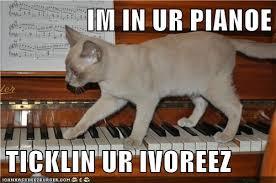 grammar catz grammar cat 72 piano cat