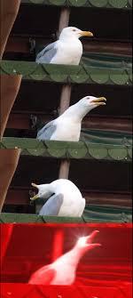Meme Ge - inhaling seagull meme generator imgflip