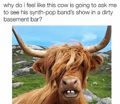 Funny Cow Memes - 10 fresh memes today 10 when sweden plays against denmark