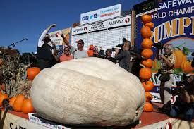 best places to get your pumpkin fix in the sf bay area cbs san
