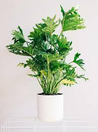 best indoor house plants best indoor house plants 10 best plants you can grow indoors for air