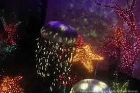 Bellevue Botanical Garden Lights Holiday Lights With A Dash Of Mayhem Walking On Travels