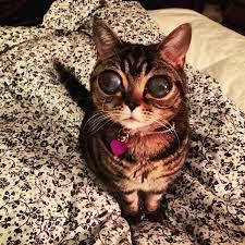 beautiful kittens matilda a beautiful beloved tabby kitten with great big alien eyes