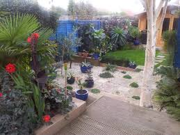 cold hardy exotic plants for that tropical garden effect the