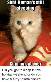 Shh Meme - shh human s still sleeping said no cat ever did you get to sleep