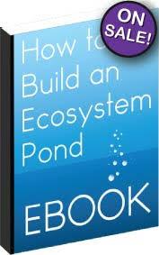 Is A Backyard Pond An Ecosystem Goldfish Ponds Everything Ponds Com