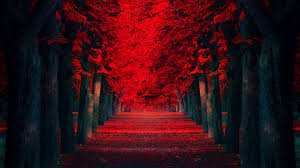 black trees forest wallpaper kafkaesque
