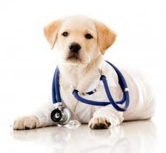 Comfort Dogs Certification Usa Therapy Dogs
