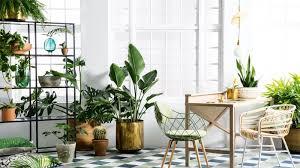 spring botanicals indoor plants greenery expert tips healthy home