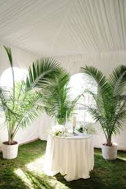 best 25 potted palm trees ideas on pool plants palm