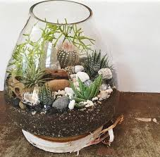 19 best terrariums by organic designs images on pinterest air