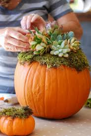 fall table arrangements diy pumpkin succulent harvest decoration simply happenstance
